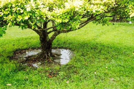 Tree Health Care