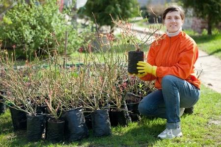 Tree & Shrub Planting