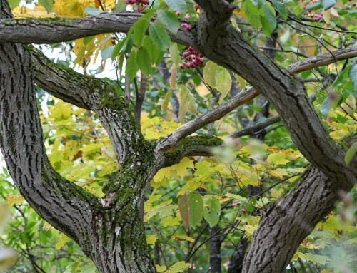 5 Best Trees to Plant in Missouri