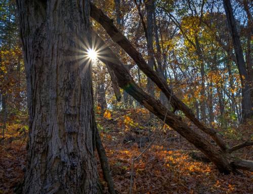 5 Common Tree Diseases in Missouri