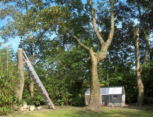 Best Time to Prune 5 Common Trees in Missouri