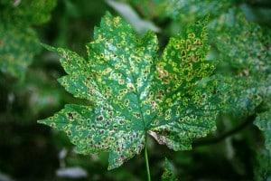 Spots on a tree leaf.