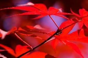 Ants on a beautiful leaf.