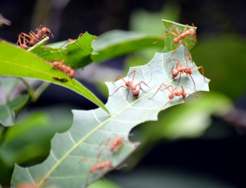 How to Get Rid of Ants Around Your Trees