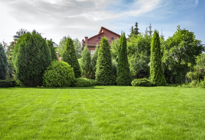 Lawn with well trimmed trees