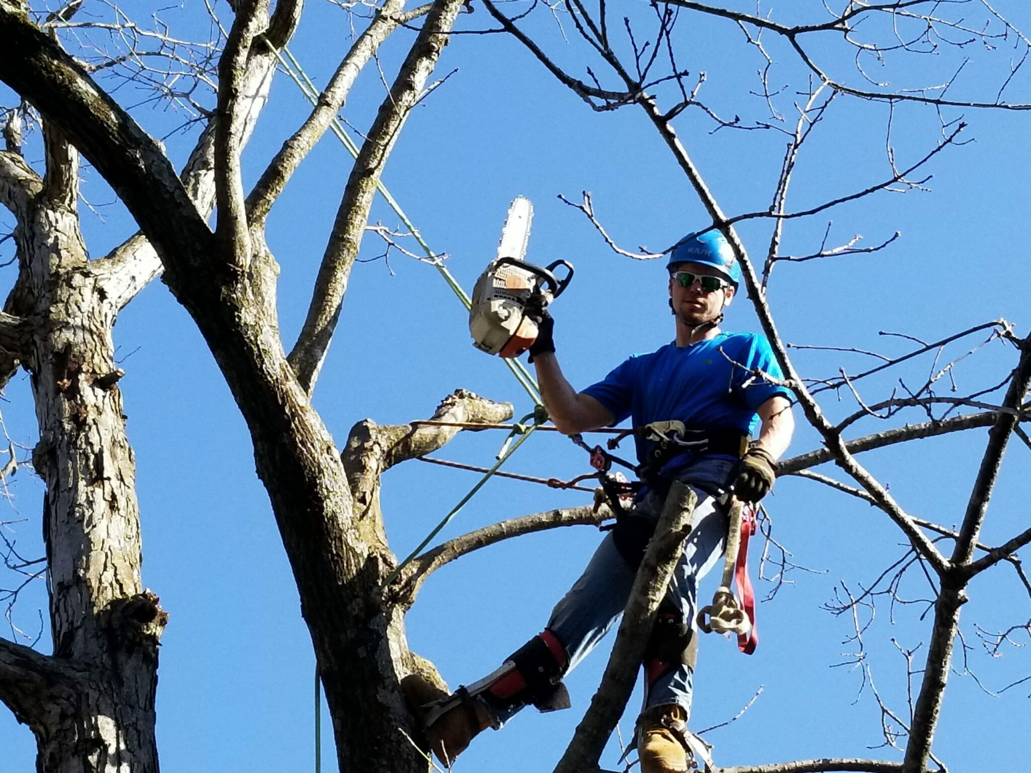 Worker in tree with chainsaw