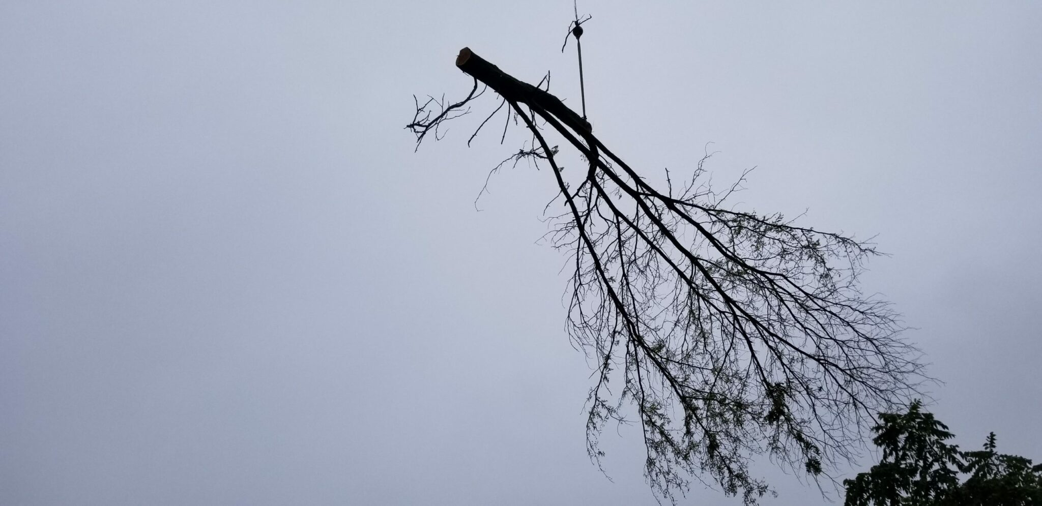 Removing branch from tree