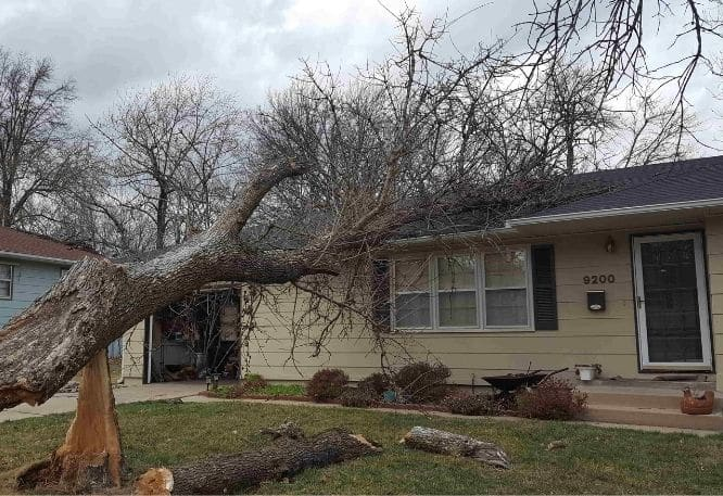 Storm damage tree fallen on roof