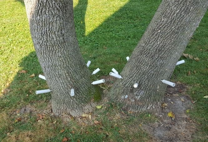 Go Green tree and Stump removal tree experts