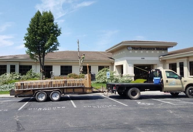 Go Green Tree and Stump removal commercial work crew