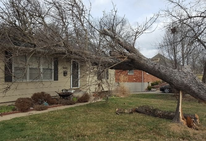 Tree that fell on house