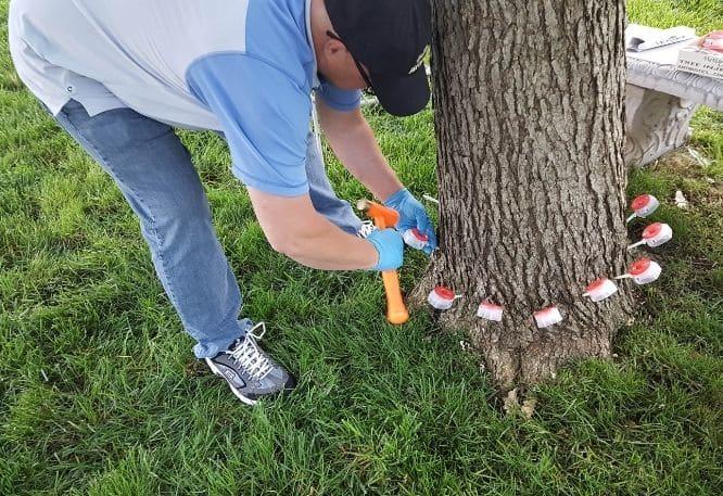 Tree healthcare expert